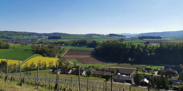 Aussichtsreiche Wanderung - Rebberge auf der Panoramawanderung Tegerfelden