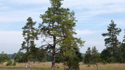 Naturschutzgebiet Grasmutter