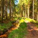 Die Struffeltroute läuft sehr idyllisch am Schleebachhanggraben entlang