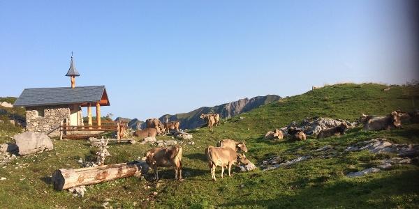 Kühe weiden bei der Kapelle im Gebiet Lidernen.