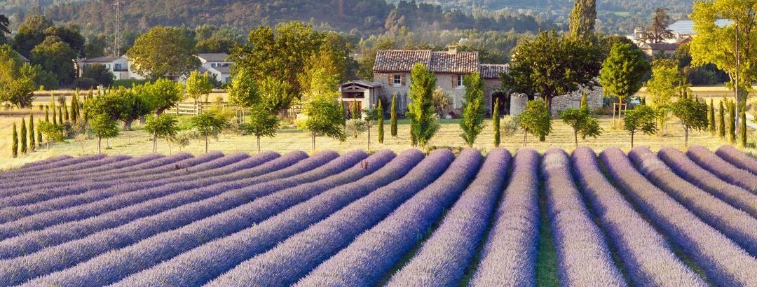 Klassische Provence: Lavendelfelder