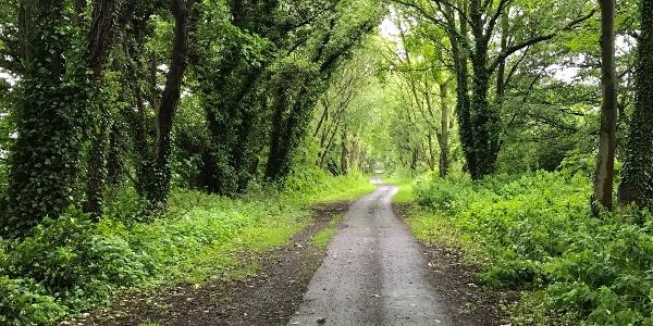 Through Woodland