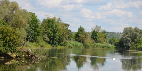 """Naturschutzgebiet """"Pferdemosel"""" am Mosel-Radweg bei Nennig"""