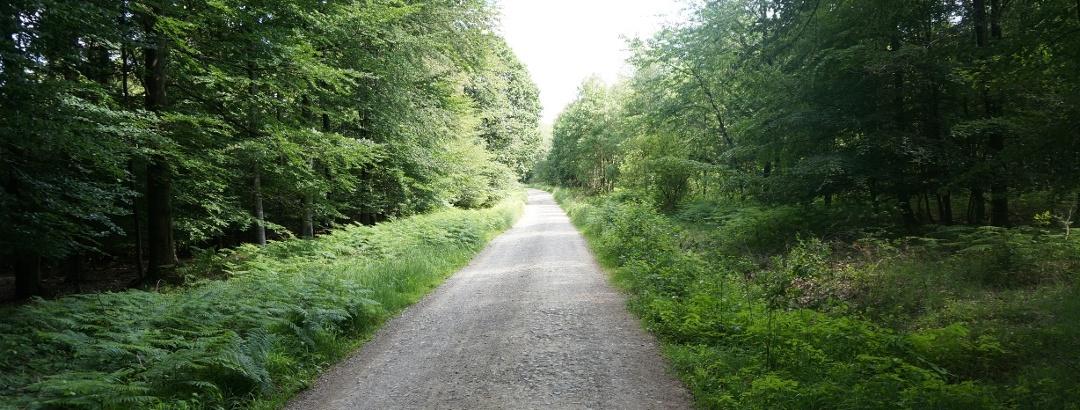 TERRA.track Wildstein - Breite Wirtschaftswege durch den Wald südlich von Bad Essen.