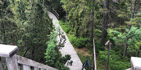 Aussichtsturm am Kleinen Kranichsee