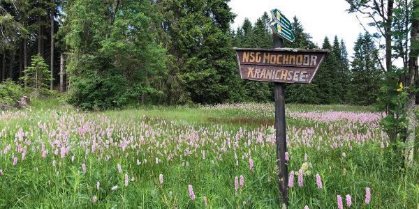 Hochmoor am Henneberger