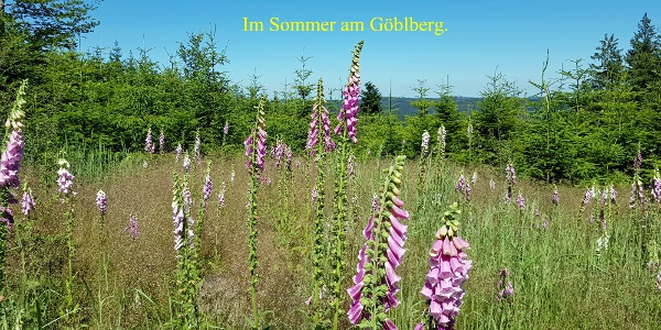 Sommerbilder vom Göblberg