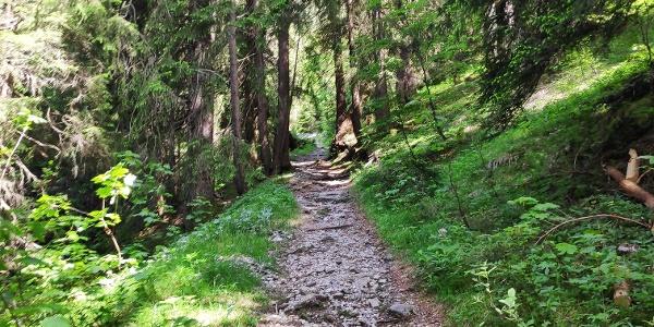 Schöner, schattiger Wanderweg im Wäldeletobel oberhalb Klösterle
