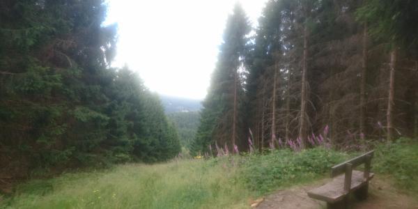 Idyllische Bank mit Ausblick auf den Harz