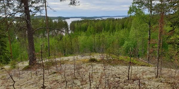 Maisema drumliinin laelta, Nestorinrantaa, geopolku
