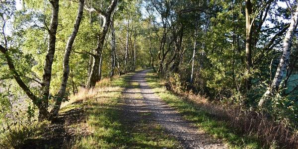 Starý násep původní úzkokolejné dráhy (Okružní trasa kolem Auerbachu)