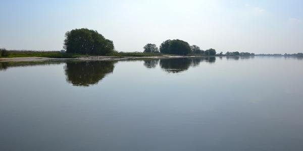 Morgensonne auf der Elbe