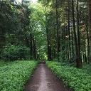 Durch den Wald bei Grabau