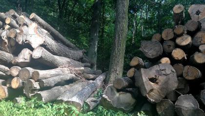 E fakupac mögött lelhető fel a Sasfészek turistaházhoz vezető igen meredek ösvény