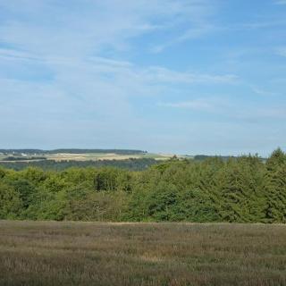 Ausblick auf die Wald- und Wiesenlandschaft