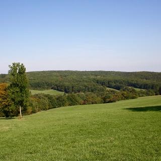 Maurer Wald | Eichwiese
