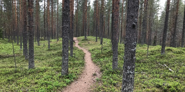 Hiukka-Pöllyvaara MTB Trail
