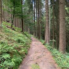 Weg auf Winterberger Gebiet