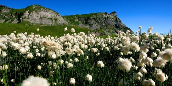 Blumen auf der Bergtour Hochstollen