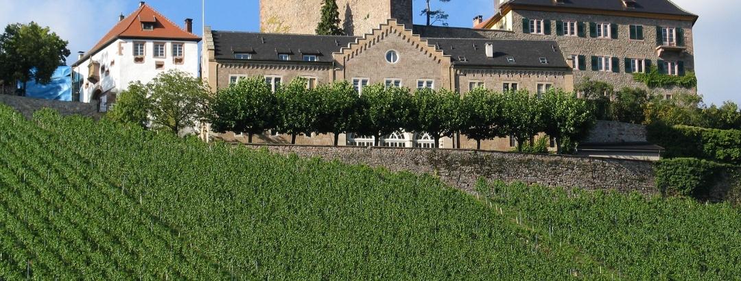 Gernsbach, Weinberg vor Schloss Eberstein