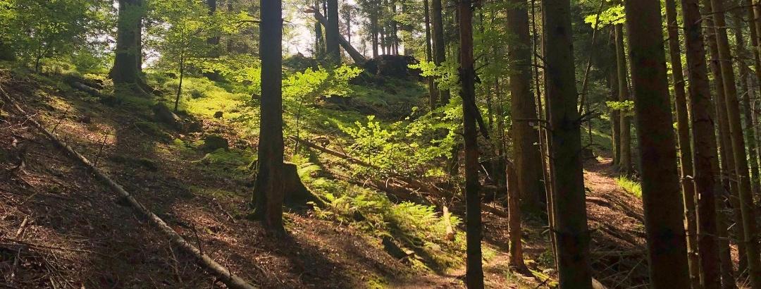 Waldpfad bei Simonswald im Schwarzwald