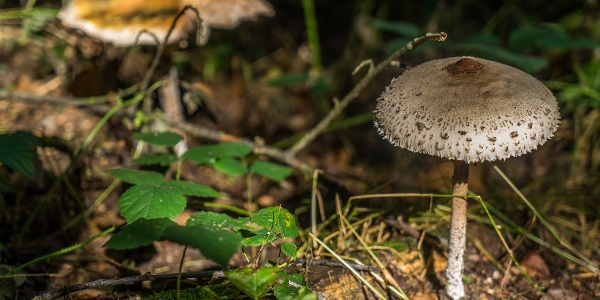 Mushrooms in the Woodland