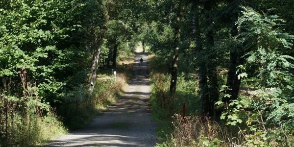 TERRA.track Fuchsweg - Im Staatsforst zwischen Merzen und Westerholte