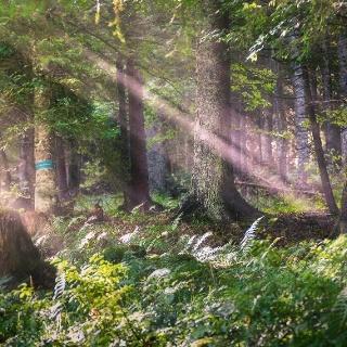 Bosco lungo il percorso