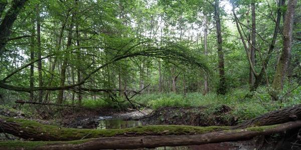 Auwälder