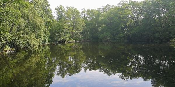 Teich im oberen Luttertal