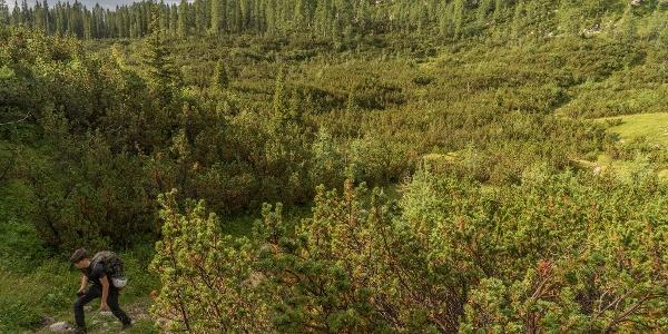 Descending Towards the Komna Plateau