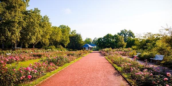 Im Rosengarten am Elberadweg