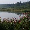 Fischweiher bei Burgwalden