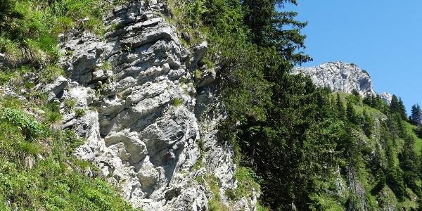 Dünnbankige Kalksteine des Alpinen Muschelkalks