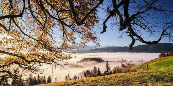 Bei Menzberg über dem Nebelmeer