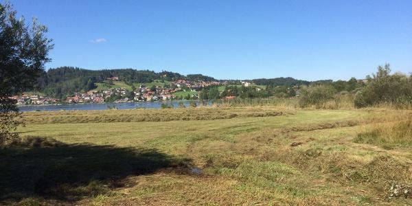 Streuwiesen rund um den Hopfensee
