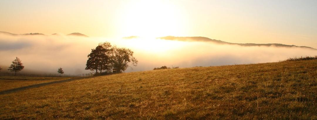 Aussicht mit Nebel