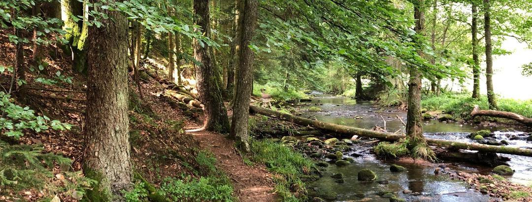 Naturpfad an der Eyach entlang