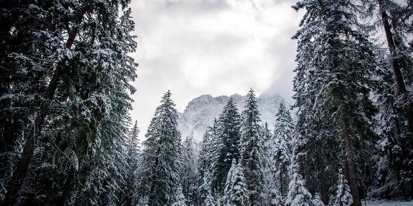 Auf dem Forstweg Richtung Schmittenwald. In diesem Bereich auf Wildfütterungen achten.
