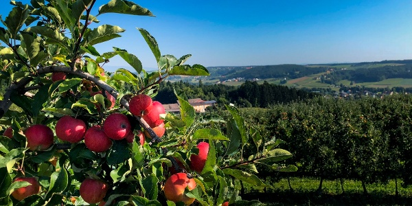 Obstgärten im Thermen- und Vulkanland
