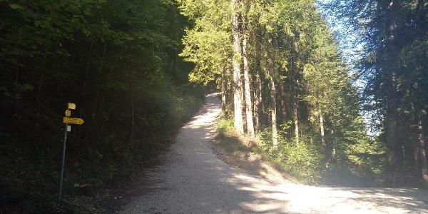 Wasserleitungsweg Richtung Säuling