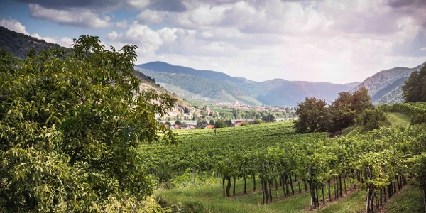 Durch die Weingärten in Rossatz