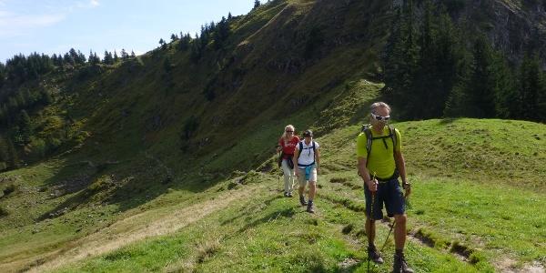 Am Steinkopfsattel im Sommer