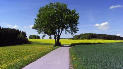 Zwischen Laichingen und Westerheim