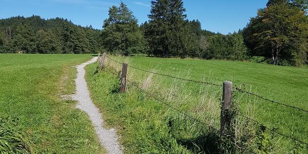 Wiesenpfad von Hopfen Richtung Faulensee