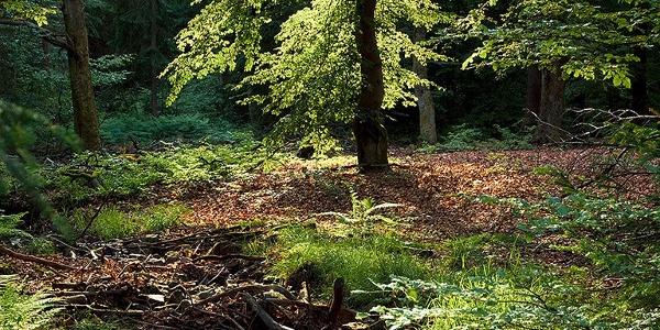 Natürliche Rinnsale im Wald
