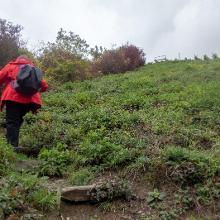 Auf dem Ameisenpfad Richtung Gipfel