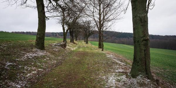 Lindenweg (Winterwanderroute Mit Hunger zum Unger Nr. 29)