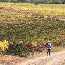 Vineyards approaching Villafranca