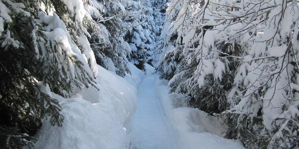 Verschneiter Winterwanderweg durch den Sagenwald